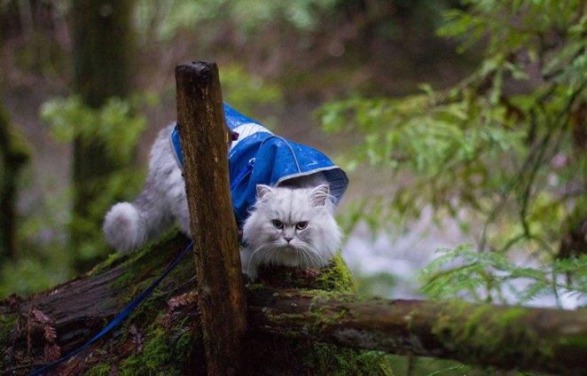 gandalf-cat-travelling-the-world-7