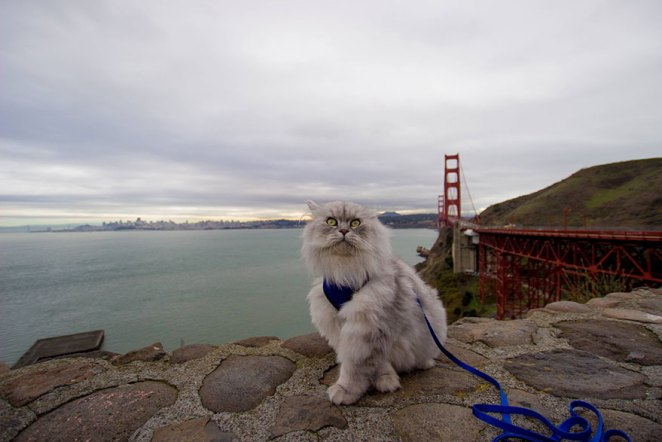 gandalf-cat-travelling-the-world-8