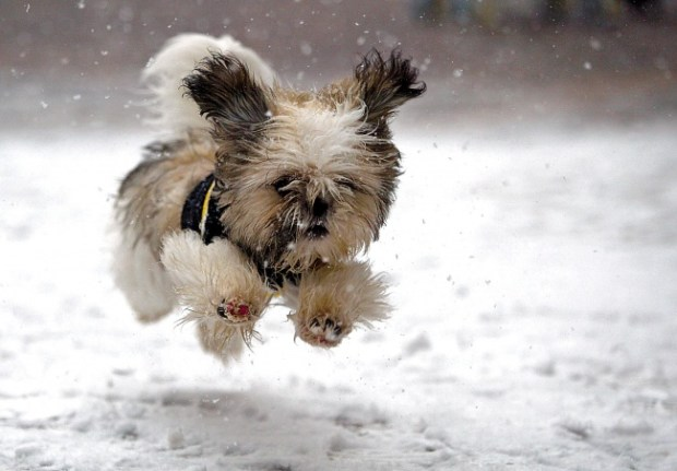 karda koşan köpek