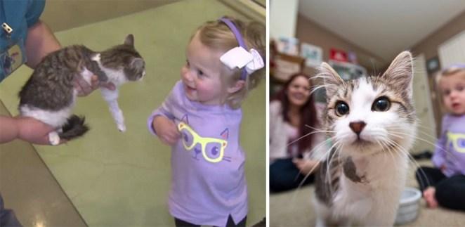 kedi kız 3
