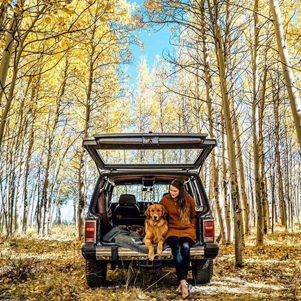 seyahat köpek