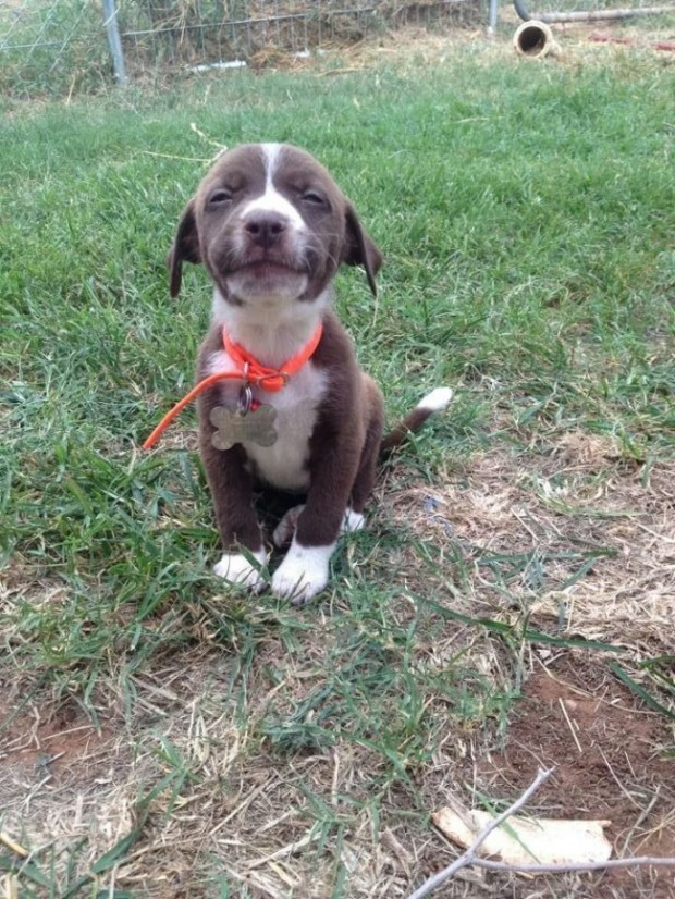 tebessüm eden köpek