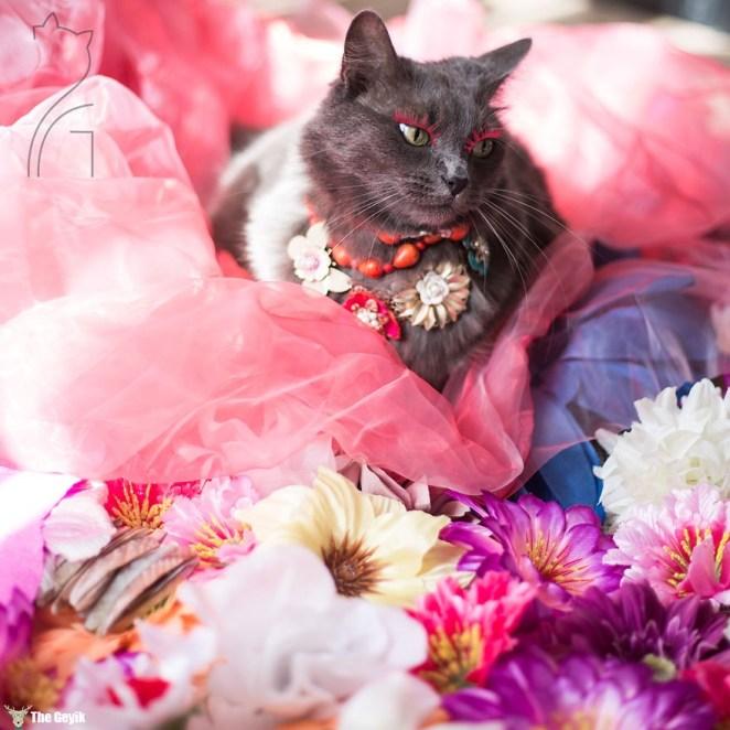 moda kedi 2
