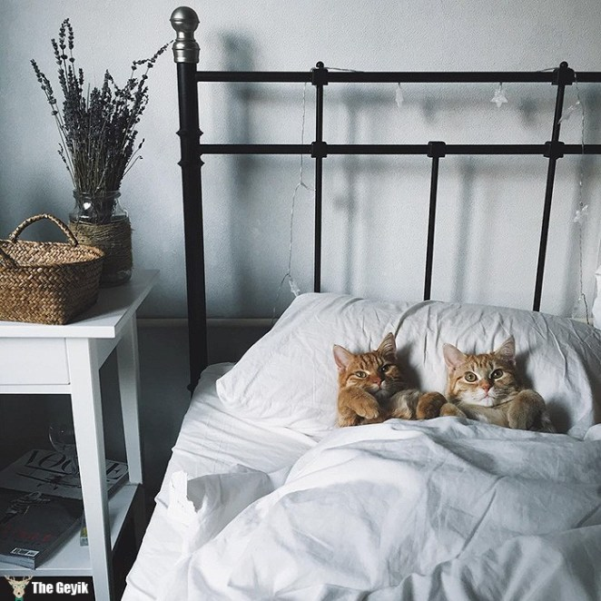 rescue-cats-inseparable-brothers-ginger-anyagrapes-8