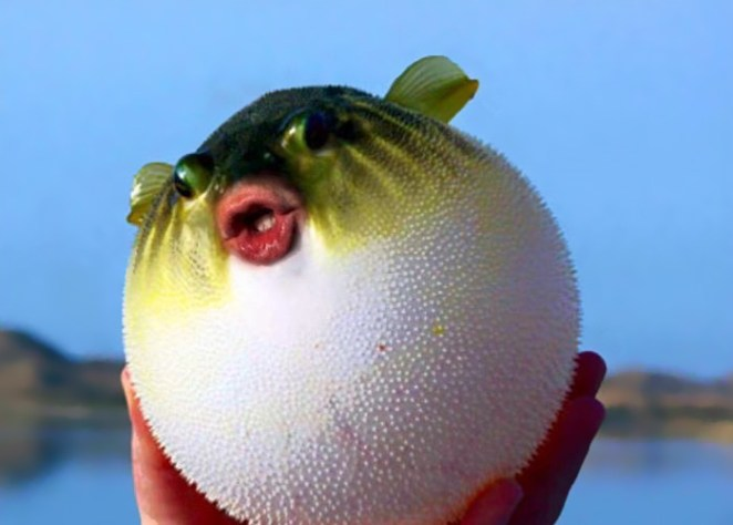 trump-puffer-fish-mouth-photoshop-33__700
