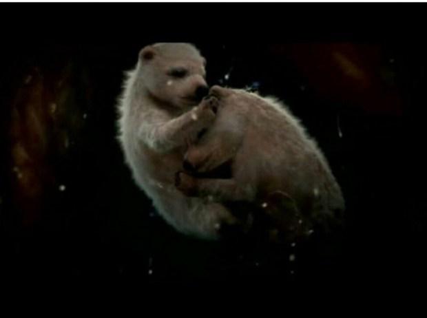 Hayvanların Anne Karnında-rahminde Ultrason Görüntüleri 14