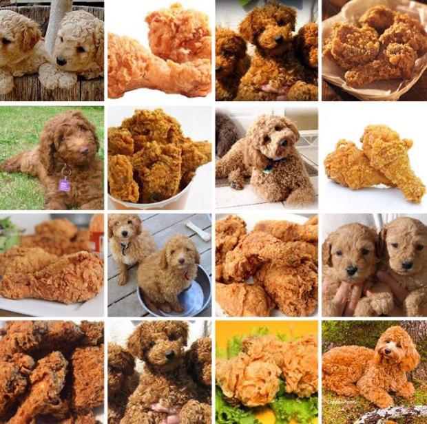 dog-food-comparison-bagel-muffin-lookalike-teenybiscuit-karen-zack-5__700