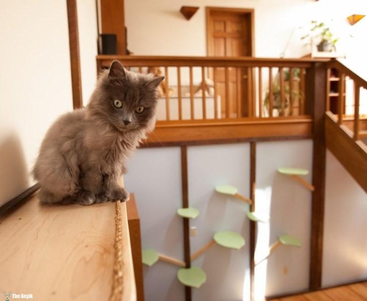 Evini Kediler İçin Tekrar Tasarlayan Hayvansever 5