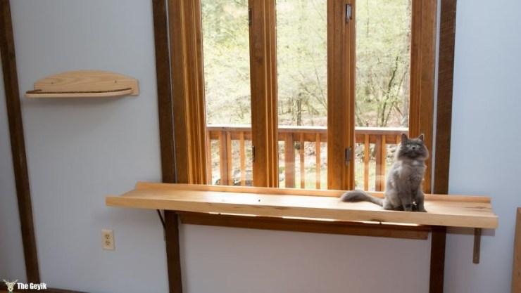 Evini Kediler İçin Tekrar Tasarlayan Hayvansever 6