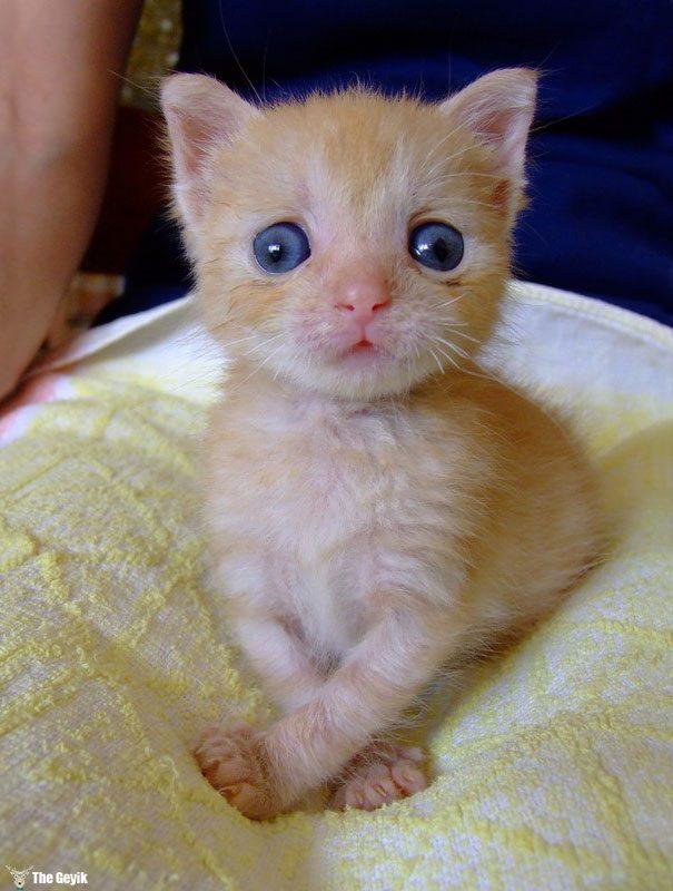 Gözleri Şaşı Olan Kediler3