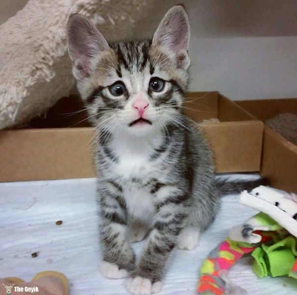 Gözleri Şaşı Olan Kediler6