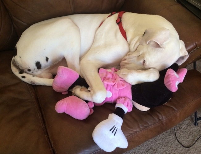Komik uyuyan hayvanlar 10