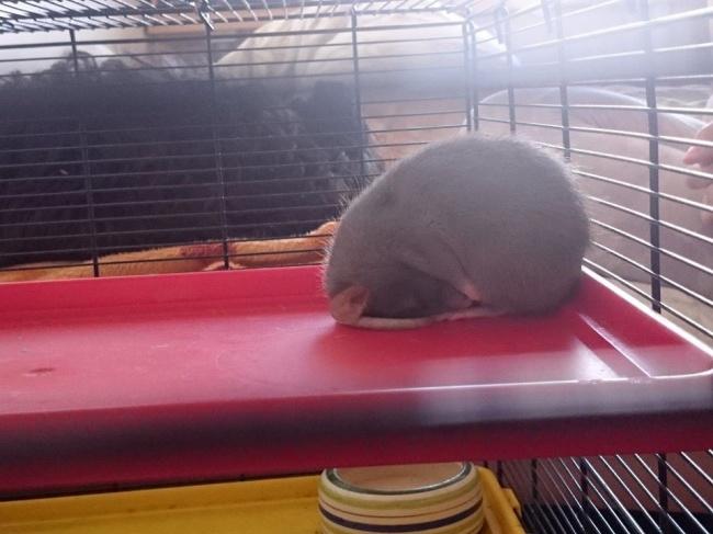 Komik uyuyan hayvanlar 9