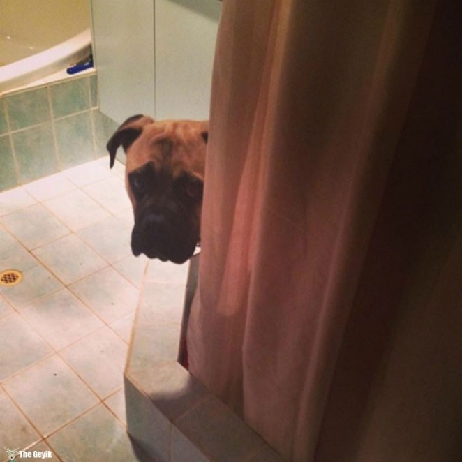 Sahibini Çaktırmadan Stalklamaya Çalışan Köpek 8