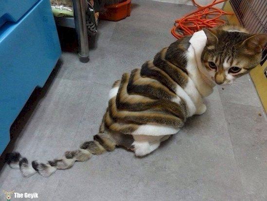 Komik köpek kedi traşları kuaför 15