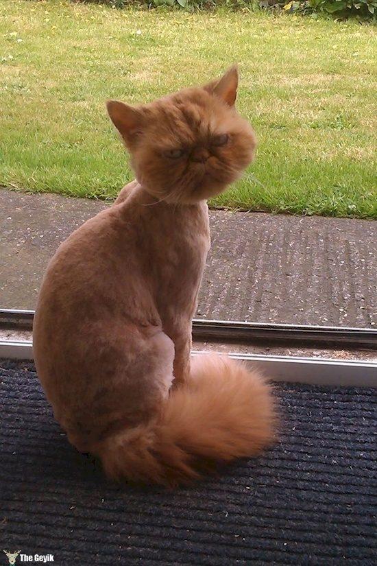 Komik köpek kedi traşları kuaför 8