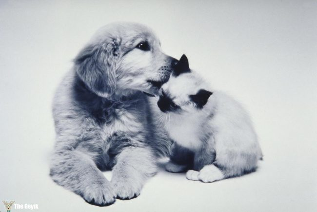dost olan kedi ve kopekler