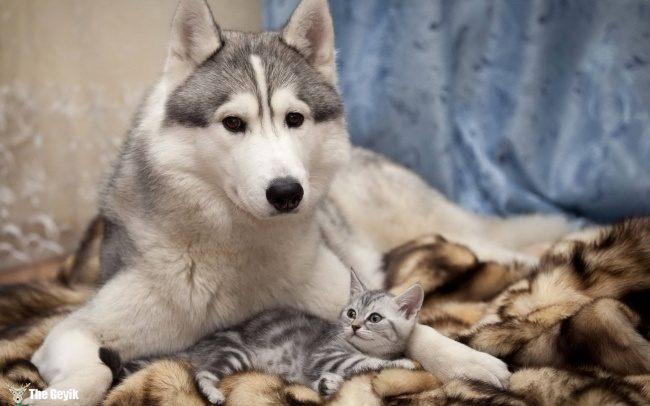 dost olan kedi ve kopekler10