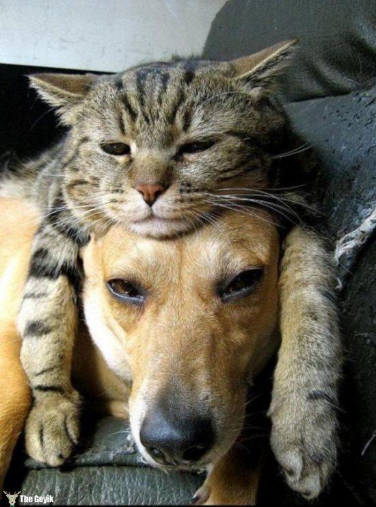 dost olan kedi ve kopekler19