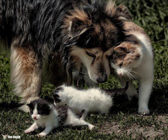 dost olan kedi ve kopekler9