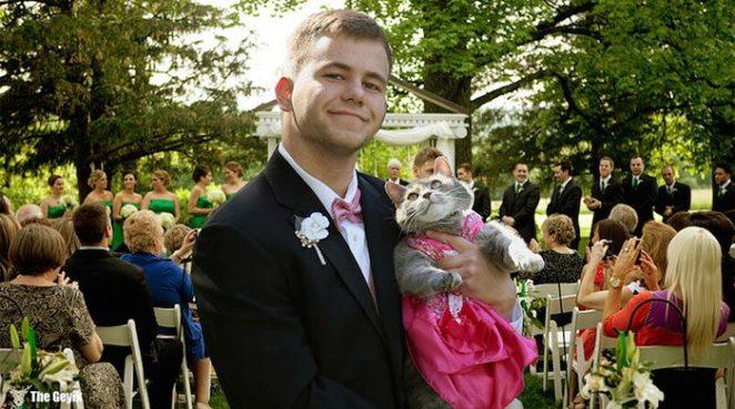 mezuniyet kedi 3