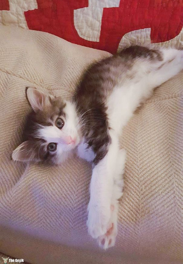 stray-kitten-found-under-truck-adopted-cat-axel-1