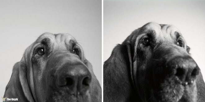 Cooper — 3 years and 10 years