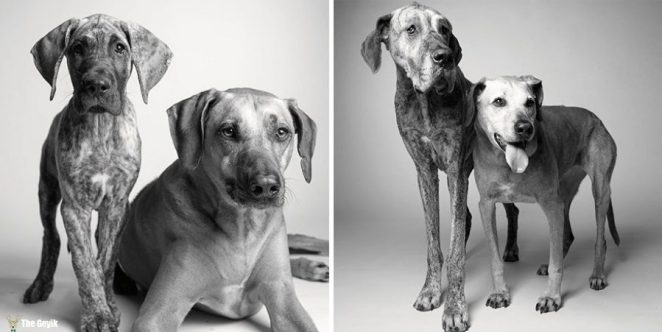 Kayden and Brodie — 11 months and 5 years; 7 years and 12 years