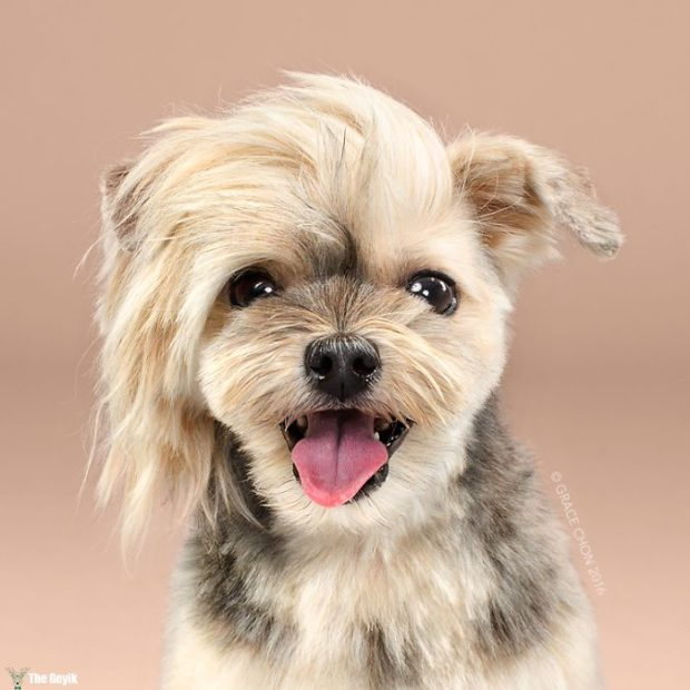 HAIRY-before-and-after-transformations-of-dog-haircuts-57940a6be6e1b__700