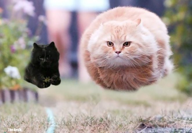 flying-cat-rugby-game-photoshop-battle-16-5784a396b45d1-png__700