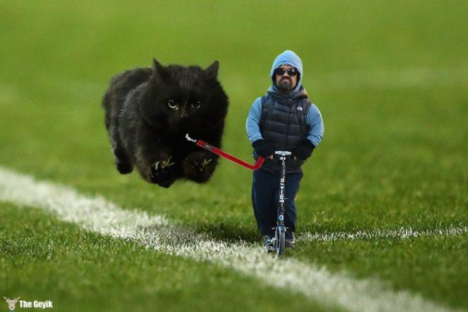 flying-cat-rugby-game-photoshop-battle-original-image2-57856530ec3a0__700