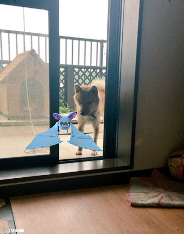 hayvanlar pokemon go görebiliyor 8