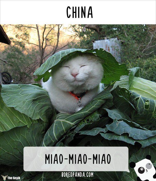 insanlar kedileri diğer dillerde nasıl çağırıyor 9