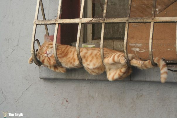 uyuyan-kediler-10