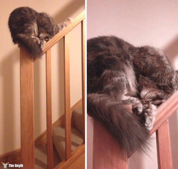 uyuyan-kediler-4