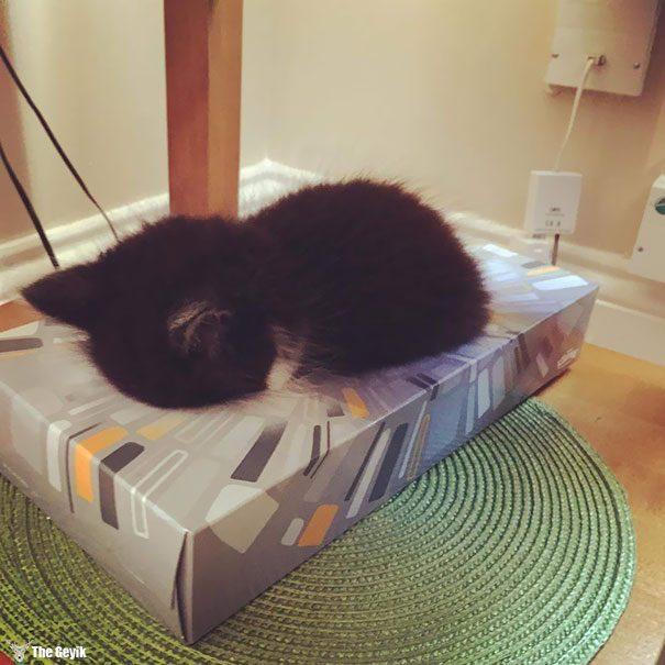 uyuyan-kediler-8