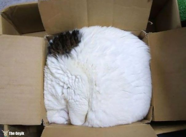 uyuyan-kediler-9