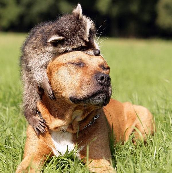 iyi-hayvanlar-5