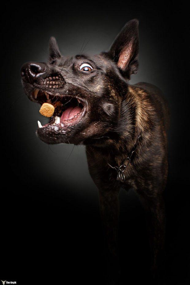 dogs-catching-food-photos-frei-schnauze-christian-vieler-7
