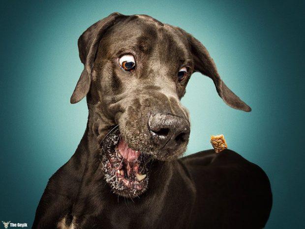 dogs-catching-treats-fotos-frei-schnauze-christian-vieler-66-57e8d9d0ec7ee__880