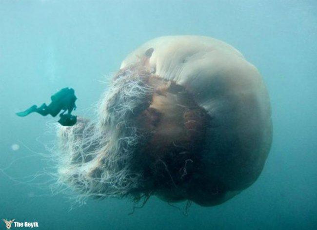 yuzmekten-korkmanizi-saglayacak-deniz-fotograflari-3