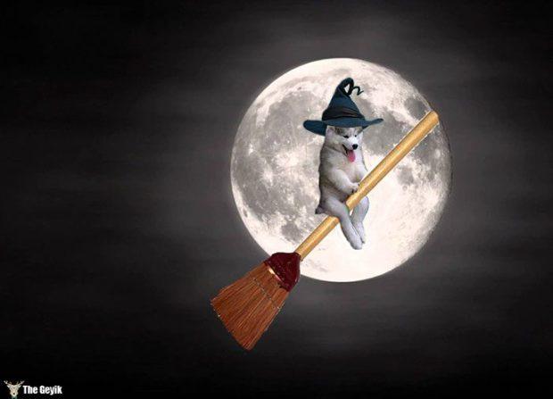 husky-agac-komik-photoshop-8