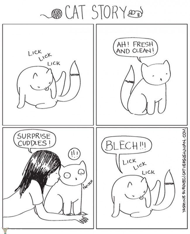 kedi10