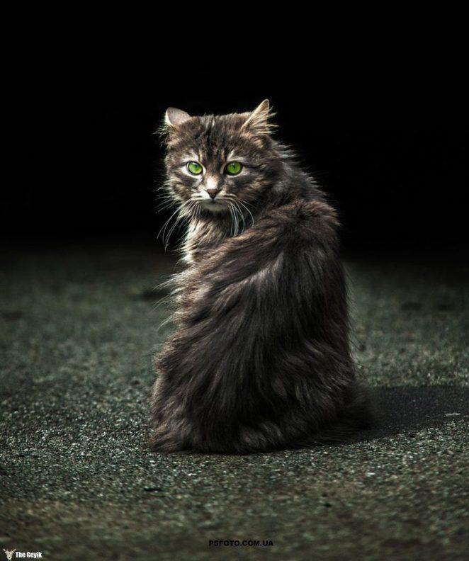 kedi3