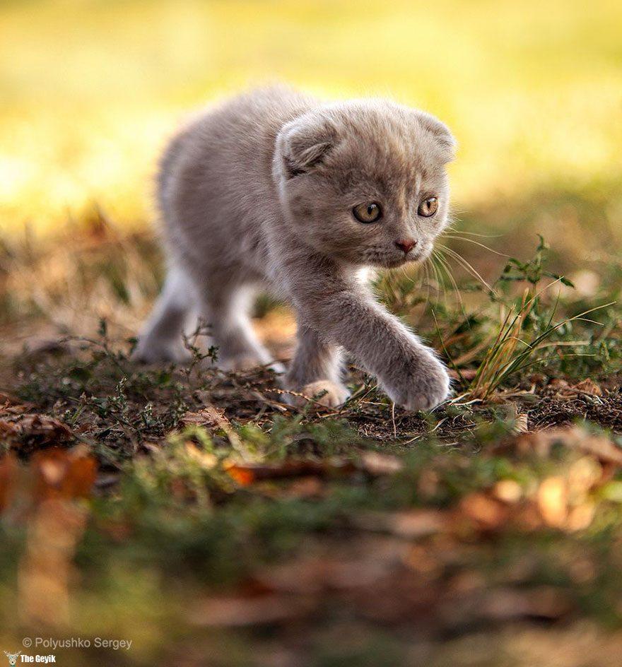 kedi5
