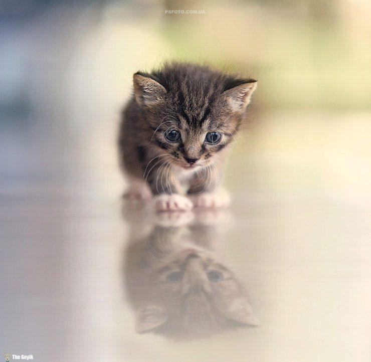 kedi8
