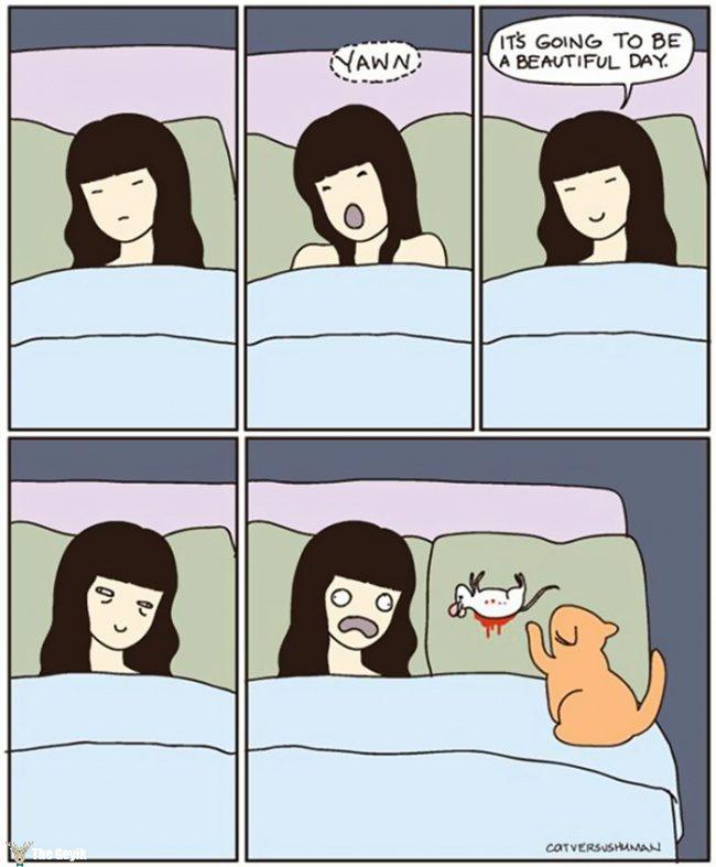 kedi9
