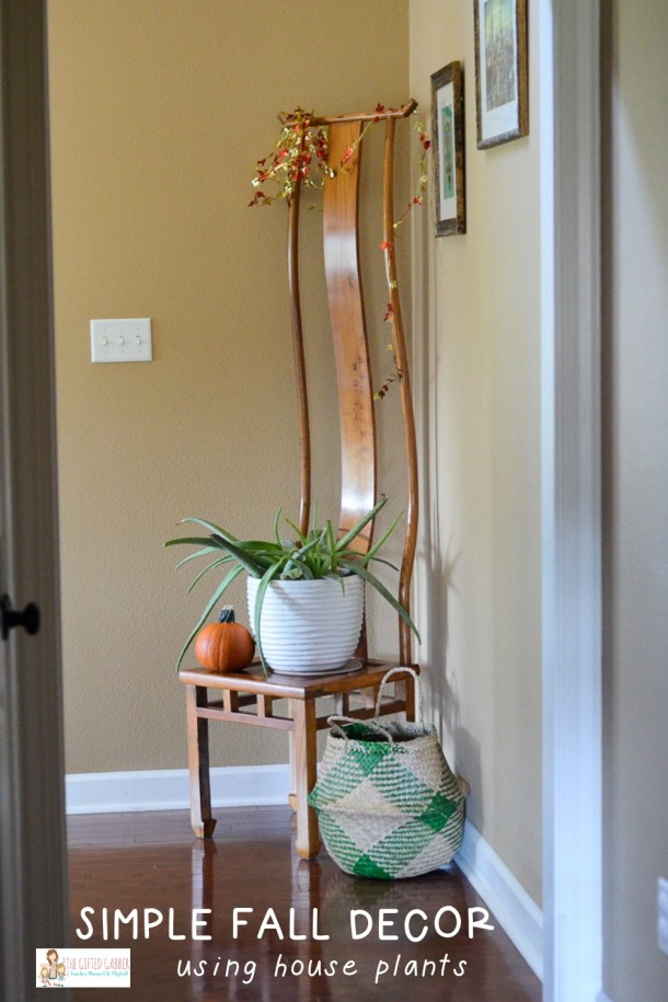 Inexpensive Fall Decor with House Plants - The Gifted Gabber