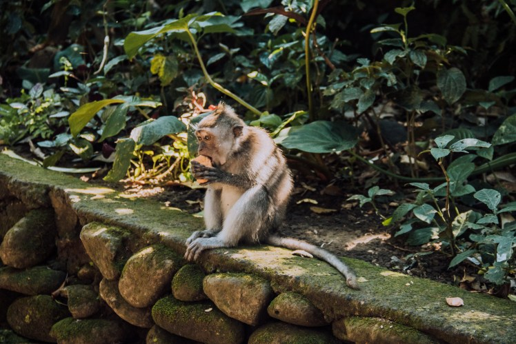 Ubud Monkey Sanctuary