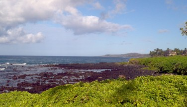poipu beach kauai shrubs